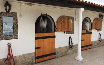 1 Mês de Aulas de Equitação por 33€ em Sintra!