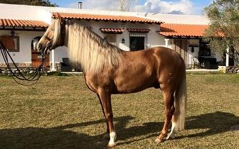 3 Meses de Aulas de Equitação por apenas 68€ em Sintra!