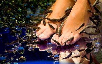 Tratamento dos pés com Peixes Garra Rufa por 10€ em Campo de Ourique!