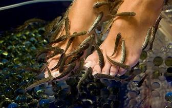 Ictioterapia: Tratamento de pés com peixes Garra Rufa por 10€ na Figueira da Foz!