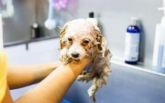 Banho para cão de peso inferior a 20Kg por apenas 15€ em Picoas!