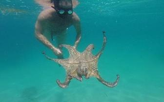 Passeio às Praias e Baías de Sesimbra com Snorkel por apenas 29€!