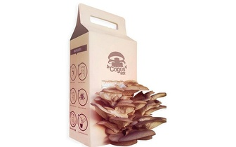 Cultive os seus Cogumelos: 2 Kit CogusBox por 14,90€ com entrega em todo o País!