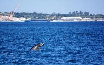 Passeio pela Rota dos Golfinhos, para 1 pessoa!