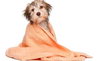 Spa + Banho + Tosquia para cães de 25kg a 40kg por 22€ na Infante Santo!