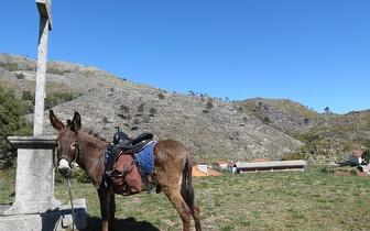 Caminhada com o Burro Aventurinhas na aldeia de Montaria (Viana de Castelo) por 9€/pessoa!