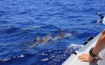 Passeio de Observação de Golfinhos e Cavalos Marinhos para 2 Pessoas por 34€ em Olhão!