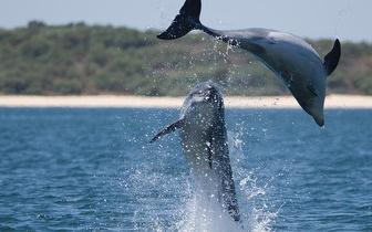 Noite de Alojamento para 2 Pessoas + Pequeno-Almoço + Observação de Golfinhos por 159€ em  Setúbal!