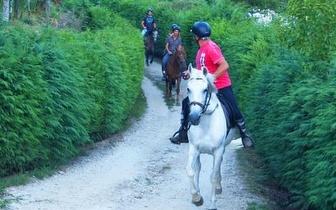 Passeio a Cavalo com 50% de desconto!