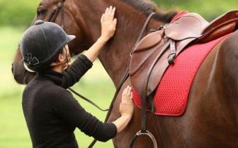 Em plena natureza: Passeio a cavalo em ambiente exterior apenas 7€ durante 1h!