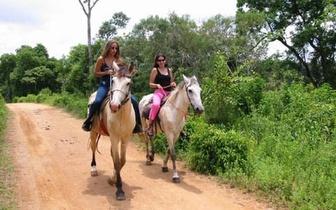 Aula de equitação para 2 pessoas por apenas 15€!