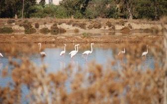 Birdwatching por 29,60€ no Parque Natural da Ria Formosa!