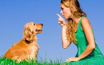 O seu cão não lhe obedece? Treino Canino por apenas 14€ no Porto!