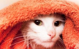 Banho Completo para Gatos, por 14€ em Moscavide!