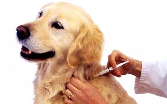 Cães: Consulta de Vacinação + Vacina da Raiva por 15€ em Moscavide!